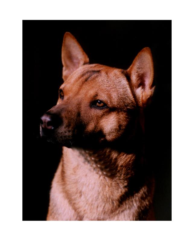 """俺家的藏狗""""波波"""",先上一张十年前两岁多时我给他图片"""
