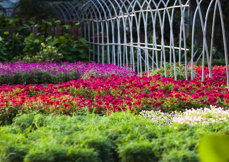 ps花圃图片素材