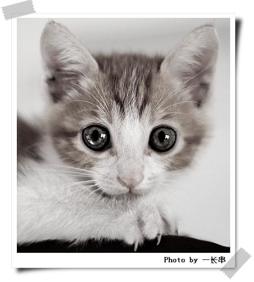 小猫爪子表情包拍桌分享展示图片图片
