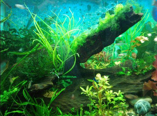 23:16 原文由 干炒牛河 发表   喜欢深圳机场候机楼内的珊瑚鱼缸!