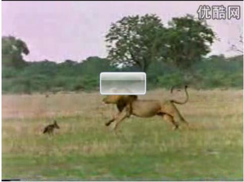 虎啸非洲 如果老虎来非洲,是否是非洲动物的恶梦
