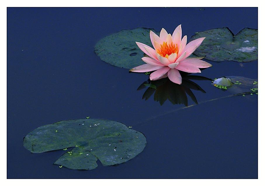 2:59 查看花卉名称及图片请到这里: 中国花卉图片网:-那些花儿