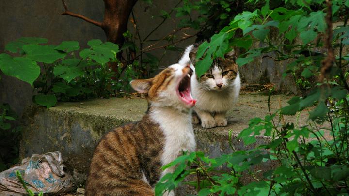 大猫和小猫 - 体育论坛