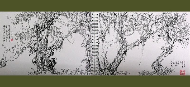 大榕树速写_记忆的底片_清安居土