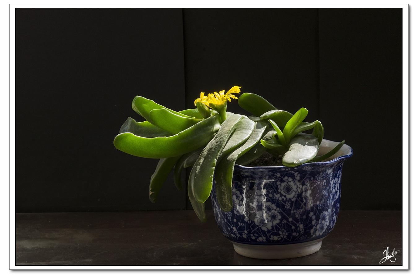 沐影桃泽_园林常用花卉植物采集(第16集) - 数码相机