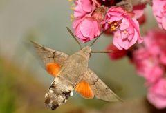 蜂鸟摄影网下载