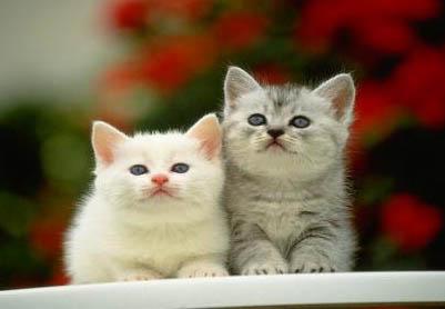 写的不错,好可爱的小猫!