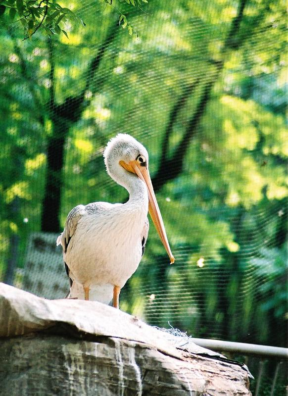 这里的鸟的种类要比动物园多许多,而且都是在一张很高很大的网子里