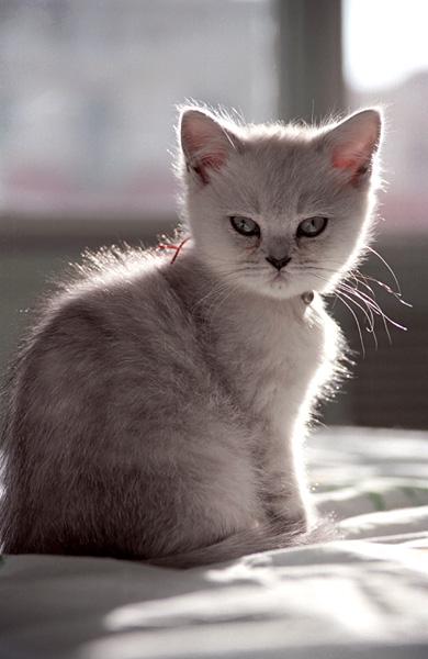 小猫爪子牵手表情_小猫爪子表情图片