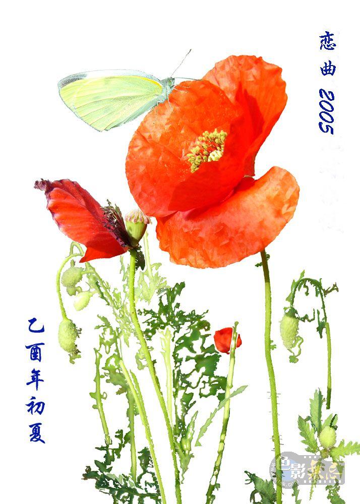 F80LY作品:恋曲2005