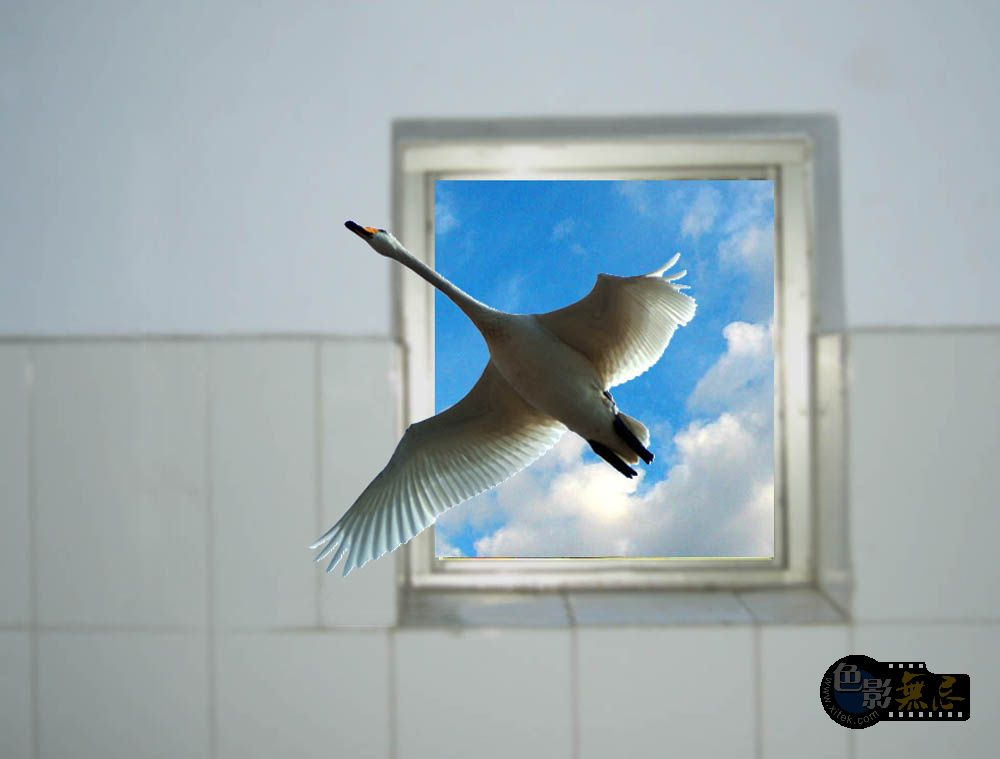 F80LY作品:翱翔