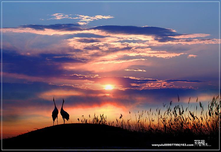 雨露。作品:夕阳恋歌
