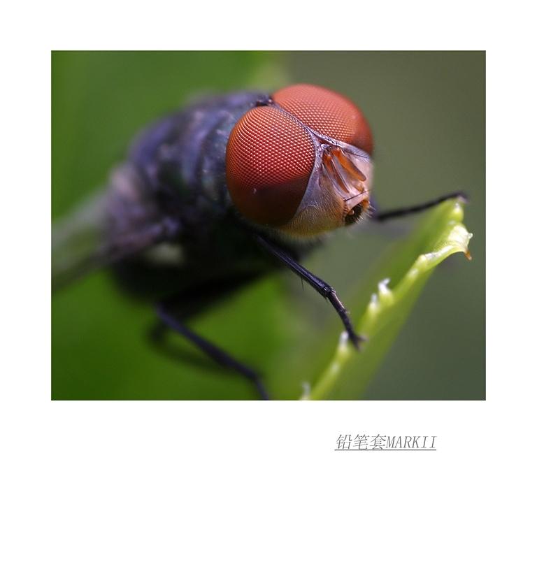 铅笔套MarkII作品:蝇