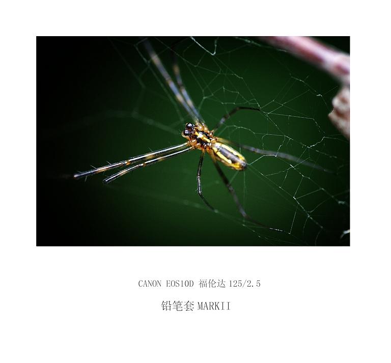 铅笔套MarkII作品:蜘蛛