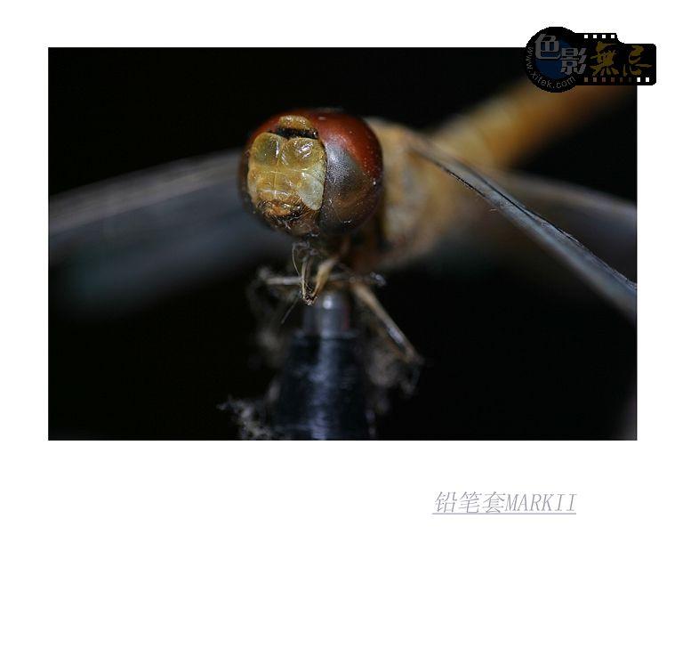 铅笔套MarkII作品:蜻蜓标本