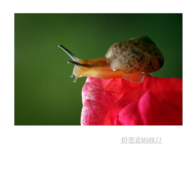 铅笔套MarkII作品:小蜗