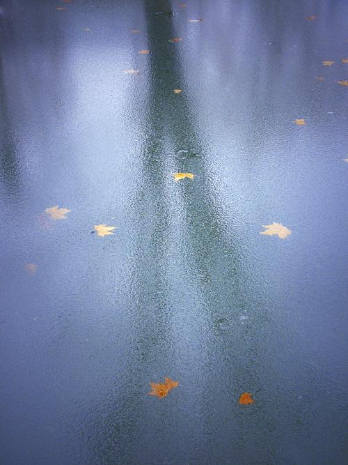 lionzsm作品:秋的平面