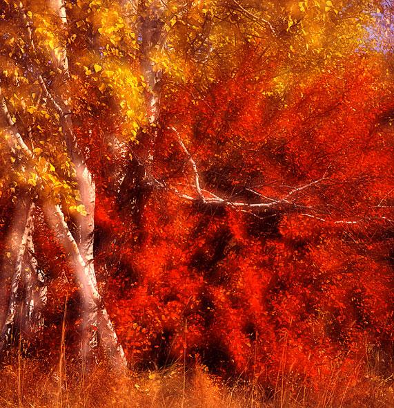 花果山作品:秋色
