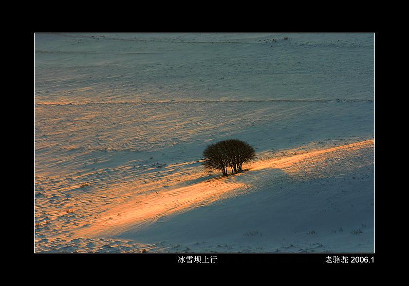 老骆驼作品:冬季坝上