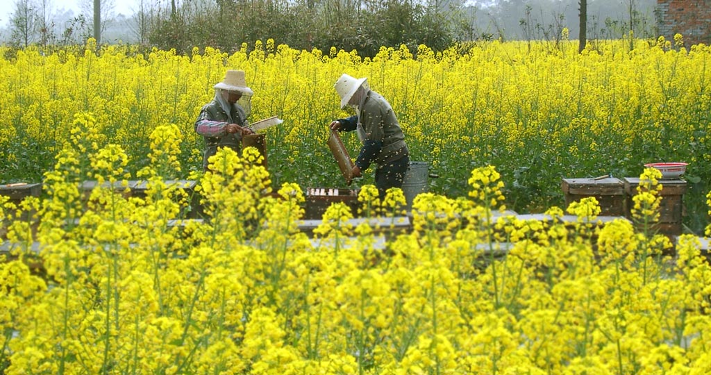 tuny作品:养蜂人