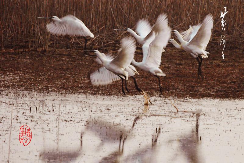 风光无限作品:轻歌漫步黄河口