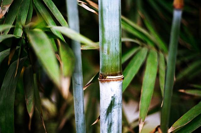 ryosun作品:练习(公园竹子)