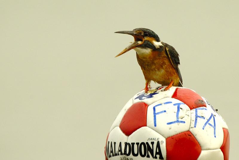 润物无声作品:〈〈足球盛宴〉〉 (3)