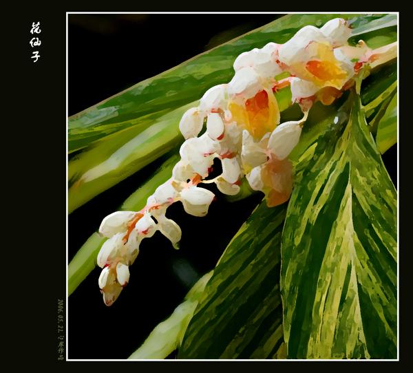 三月百合作品:花仙子系列