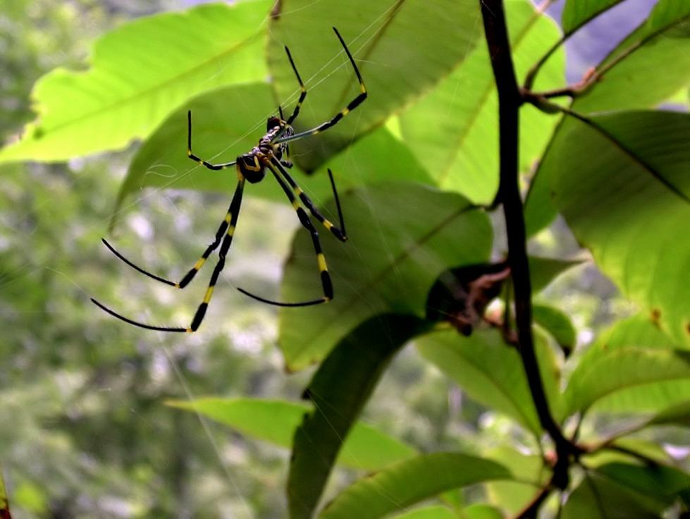不甘霓石作品:毒蜘蛛