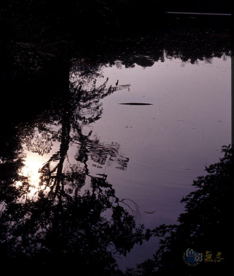 孔雀作品:池中的暮影