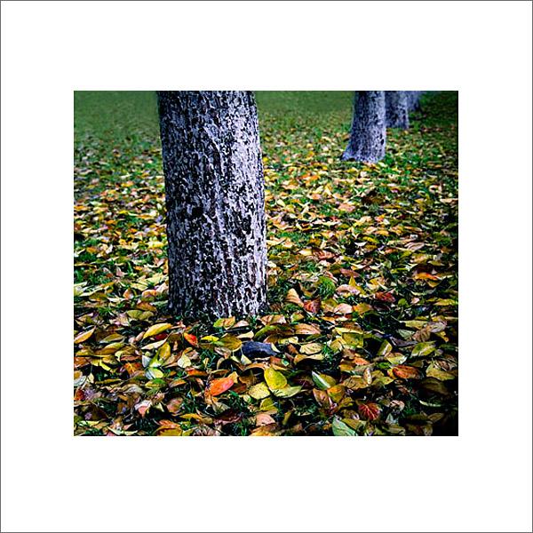绿洲作品:秋日写意