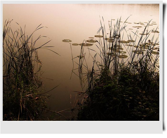 流沙作品:草色黄昏