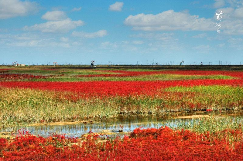 风光无限作品:湿地之秋