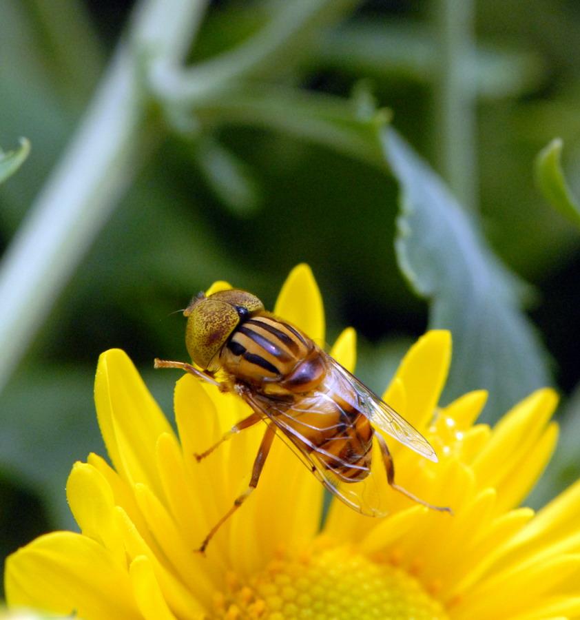 东方摄影爱好者作品:昆虫
