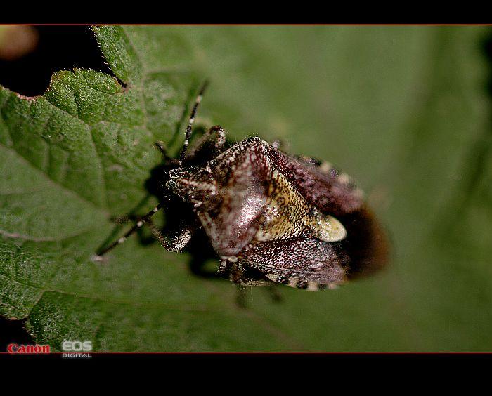 weilong作品:虫虫