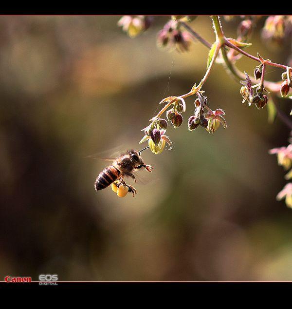 weilong作品:bee