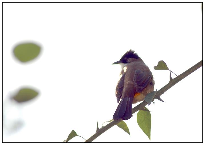 a123zj作品:鸟
