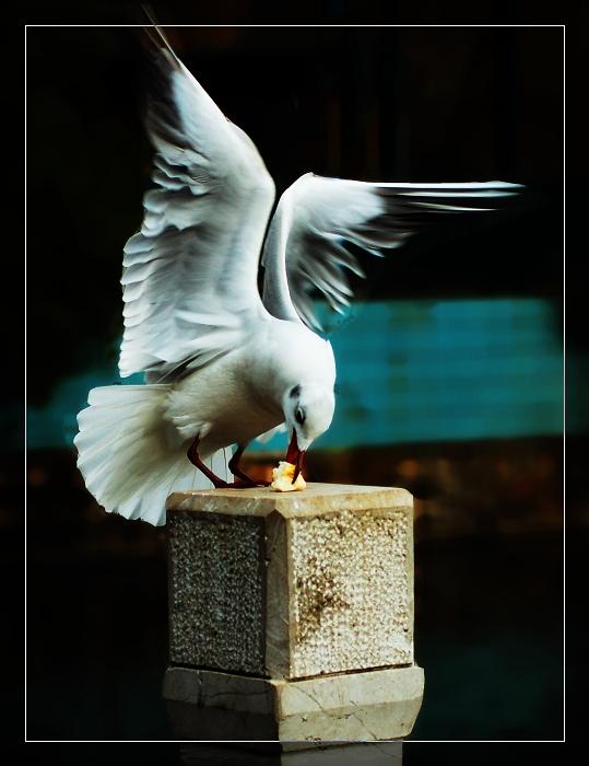 a123zj作品:海鸥的巴蕾