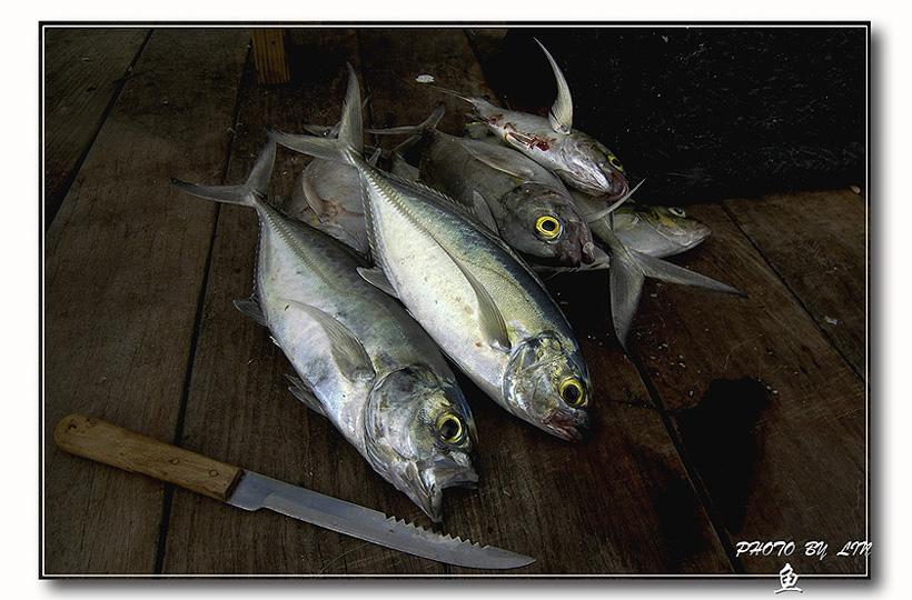 骊歌作品:砧板上的鱼