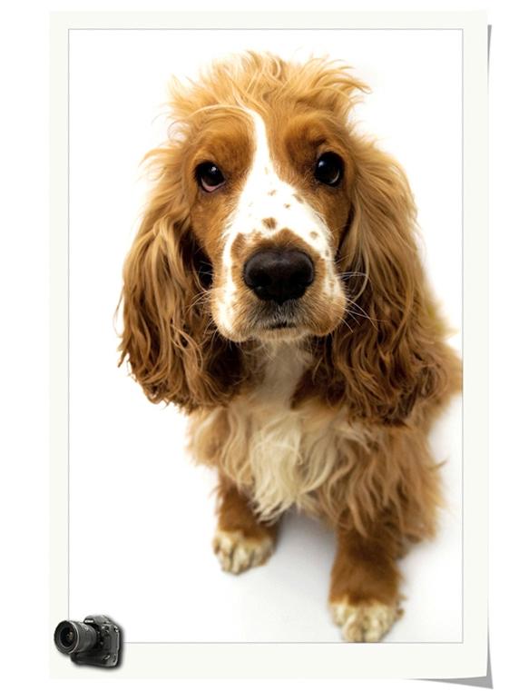 安静觉得作品:狗狗的大头照