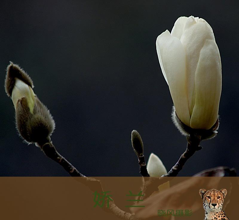 一韧作品:春之子