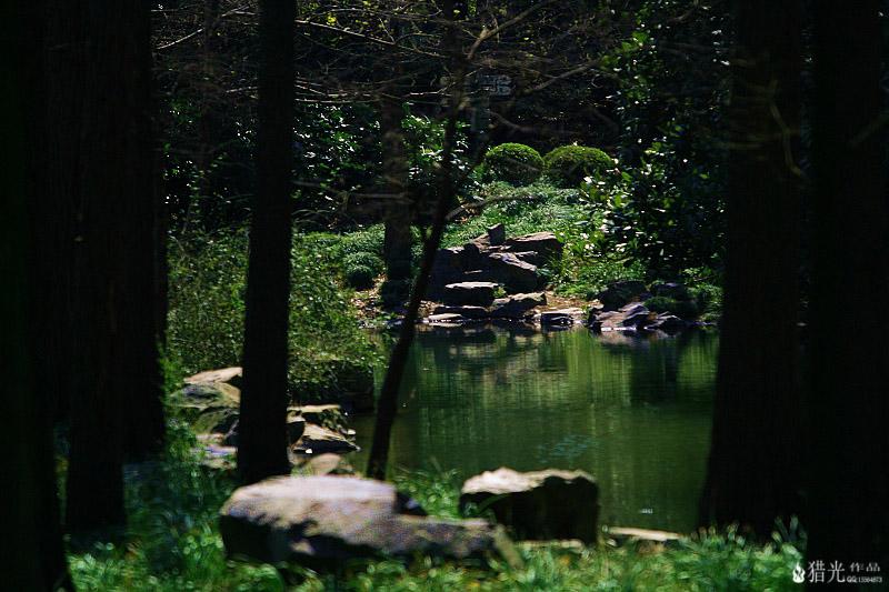 猎光作品:植物园角落