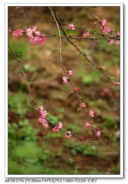 kxty作品:几枝桃花闹春来3