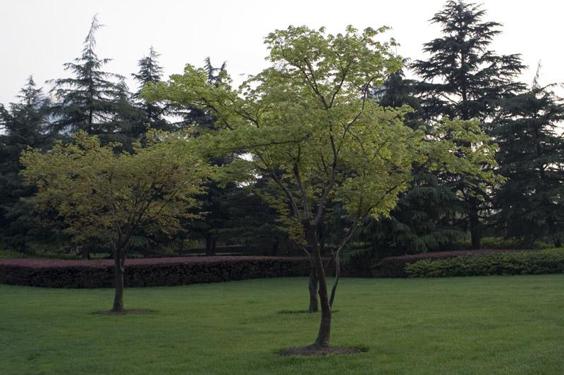 猎光作品:树