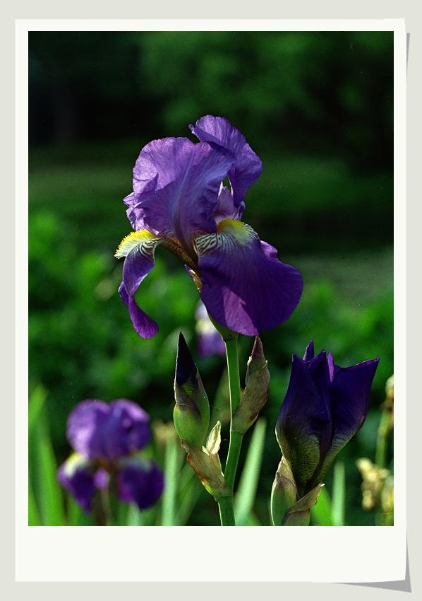 a123zj作品:国产胶片和镜头下的花卉