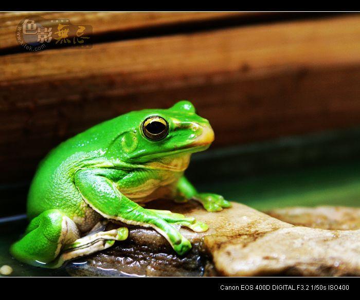 蹲点守侯作品:绿青蛙~~