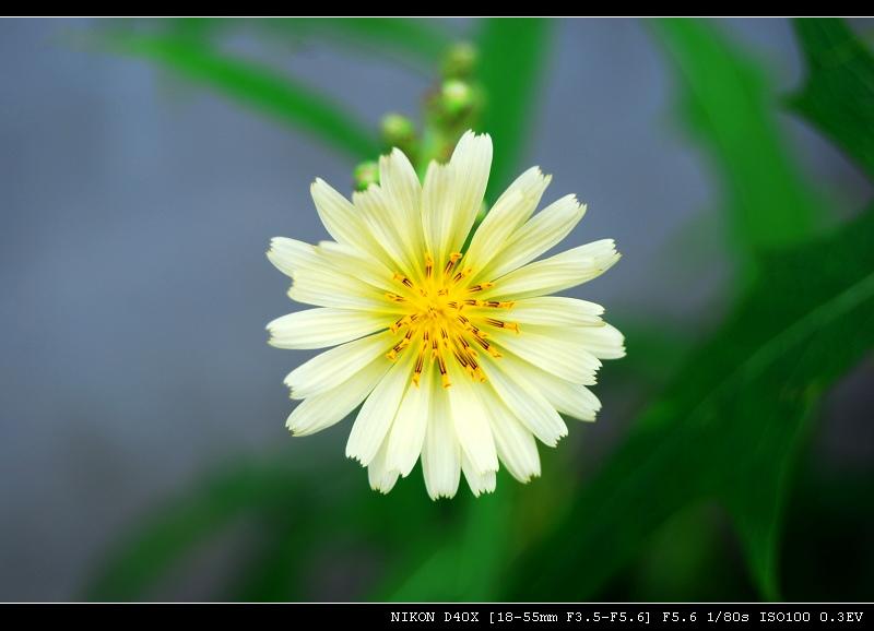 望远镜作品:路边的野花......