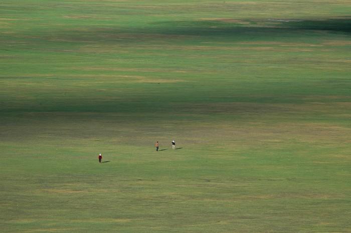 狐狸乌鸦摄影作品 野茫茫