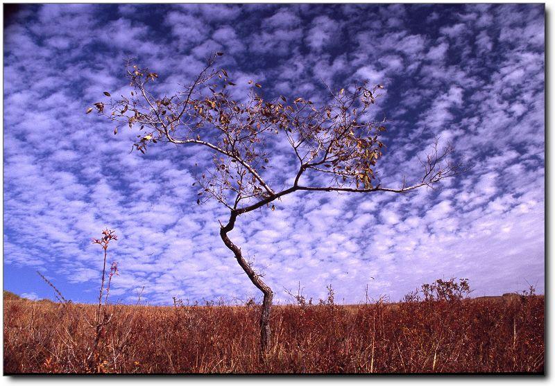 古剑摄影作品 仰望天空