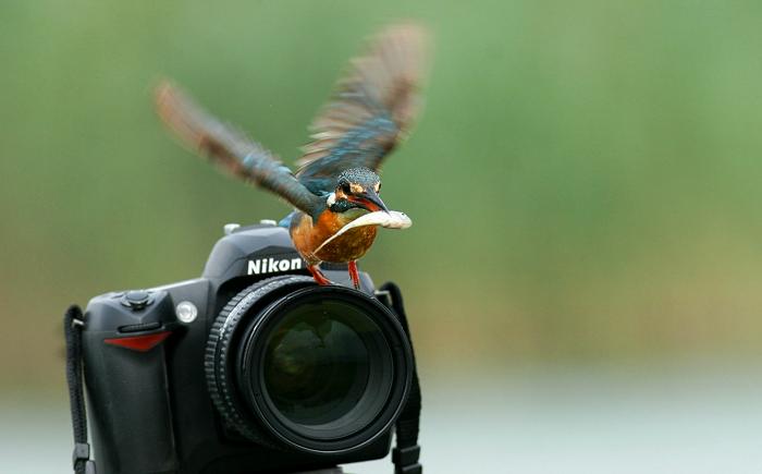 润物无声作品:相机与翠鸟